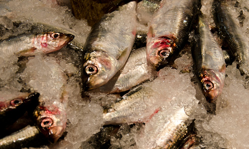 Fresh Herring at Lonsdale Quay Market, North Vancouver