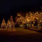 VanDusen Festival of Lights - Magic