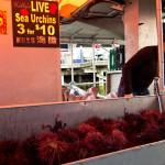 Uni (red sea urchin) for sale at Steveston, Richmond