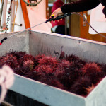 Uni (red sea urchin) for sale at Steveston, Richmond