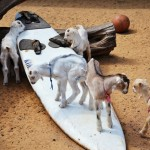 Surfing Kids at Surfing Goat Dairy Maui