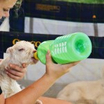 One day old at Surfing Goat Dairy Farm Maui Hawaii