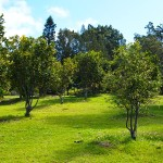 The Orchards at O'o Farm in Upcountry Maui