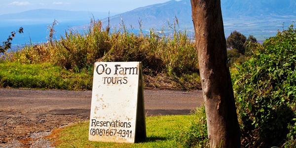 O'o Farm in Upcountry Maui
