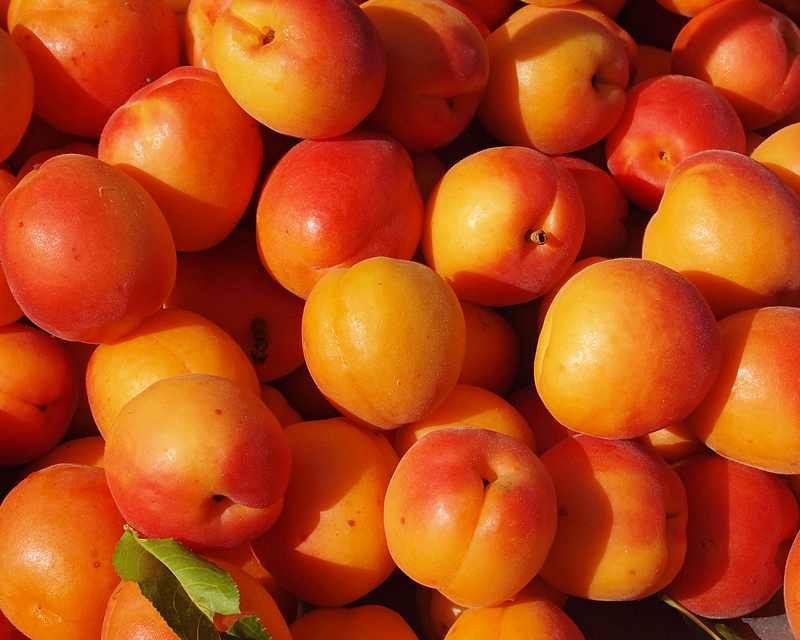 West End Farmers Market - Summer. BC Organic Apricots.