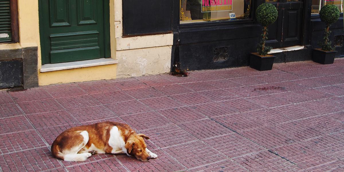 Sleeping dog in Ciudad Vieja Montevideo Uruguay