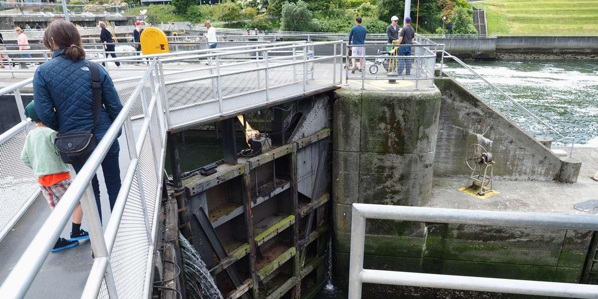 Seattle s ballard locks explore a local gem claire from for Ballard locks fish ladder