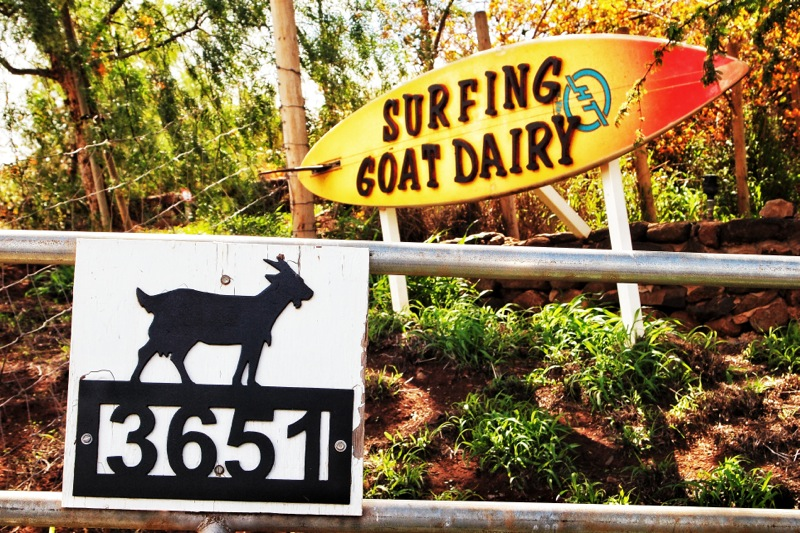 Surfing Goat Dairy Farm Maui Hawaii