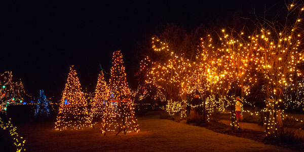 Festival of Lights VanDusen Garden Vancouver Christmas